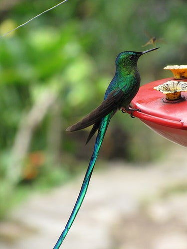 Hummingbird reserve near Salento, Colombia