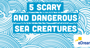 5 Dangerous Marine Animals: Prevention and Remedies