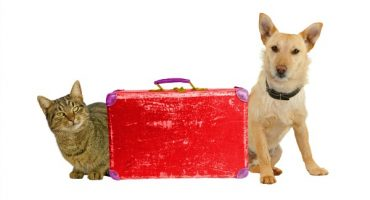 Flying With Pet Dogs and Cats – Rules By Airline