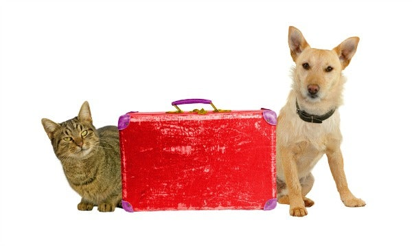 Flying with dogs and cats rules by airline edreams for Air travel with dog in cabin
