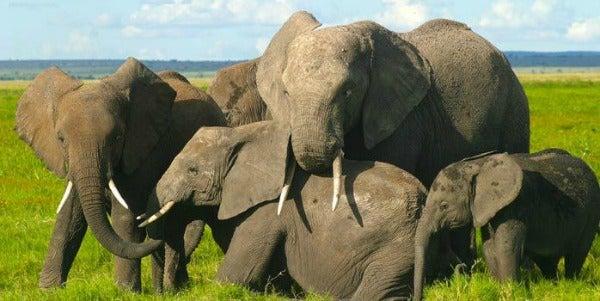 elephants IFAW responsible tourism