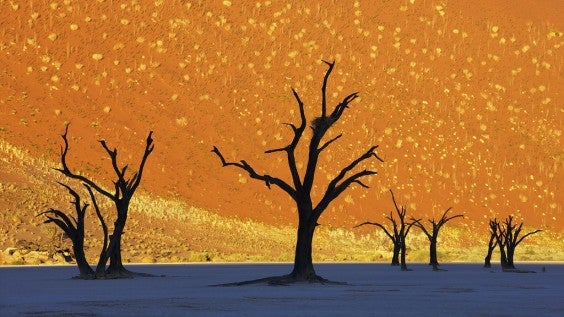 Dead Trees in Dead Vlei