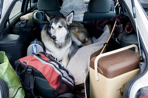 traveling with pets plan ahead