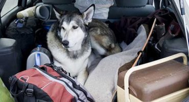 6 Tips for Travelling with Your Pet