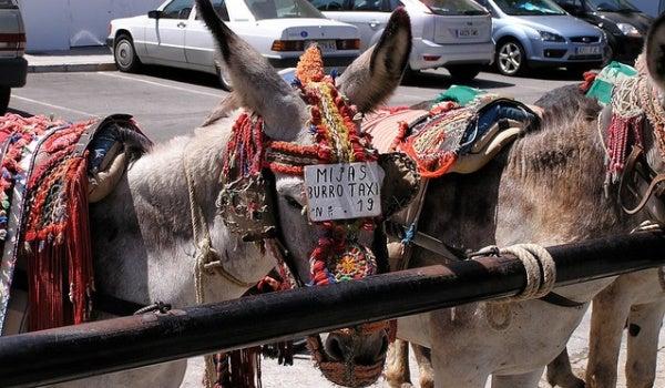 Biurro-taxi