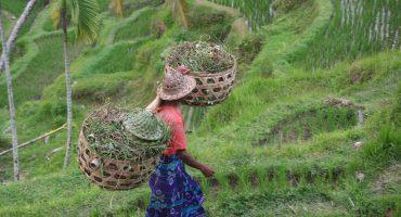 7 Curiosities about Bali