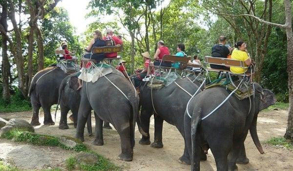Passeios de Elefante