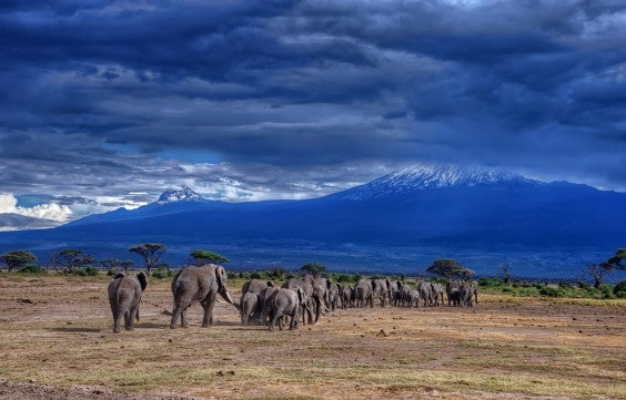 Elephants at the foot of Kilimanjaro