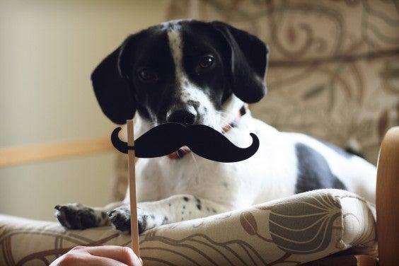 dog mustache