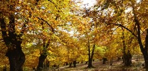Tourism Tips for a Holiday in Andalucia in Autumn