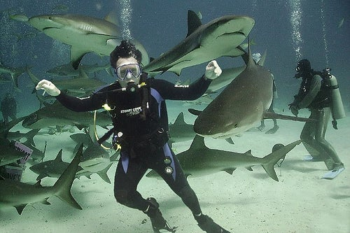 Top-Shark-Diving-Destinations-Nassau-Bahamas