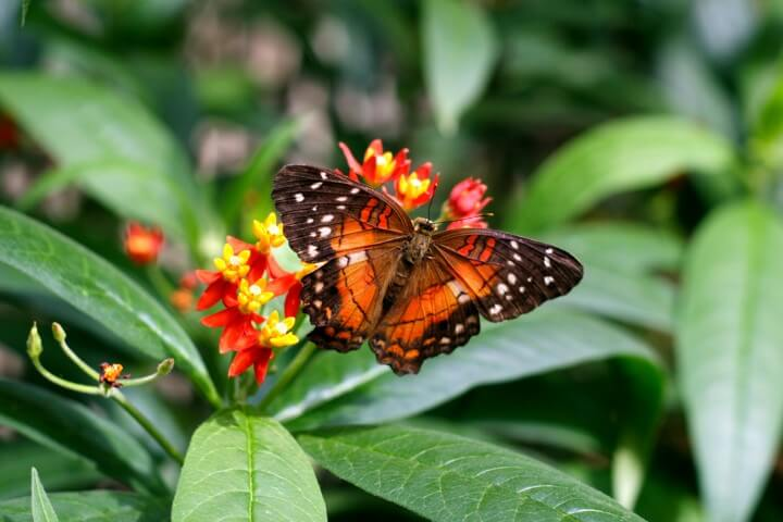 Butterfly House in vienna