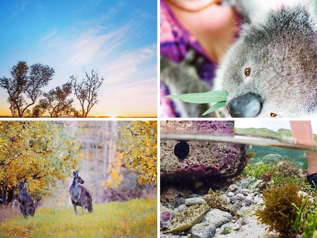 18 Top Instagram Accounts To Follow If You're Visiting Australia