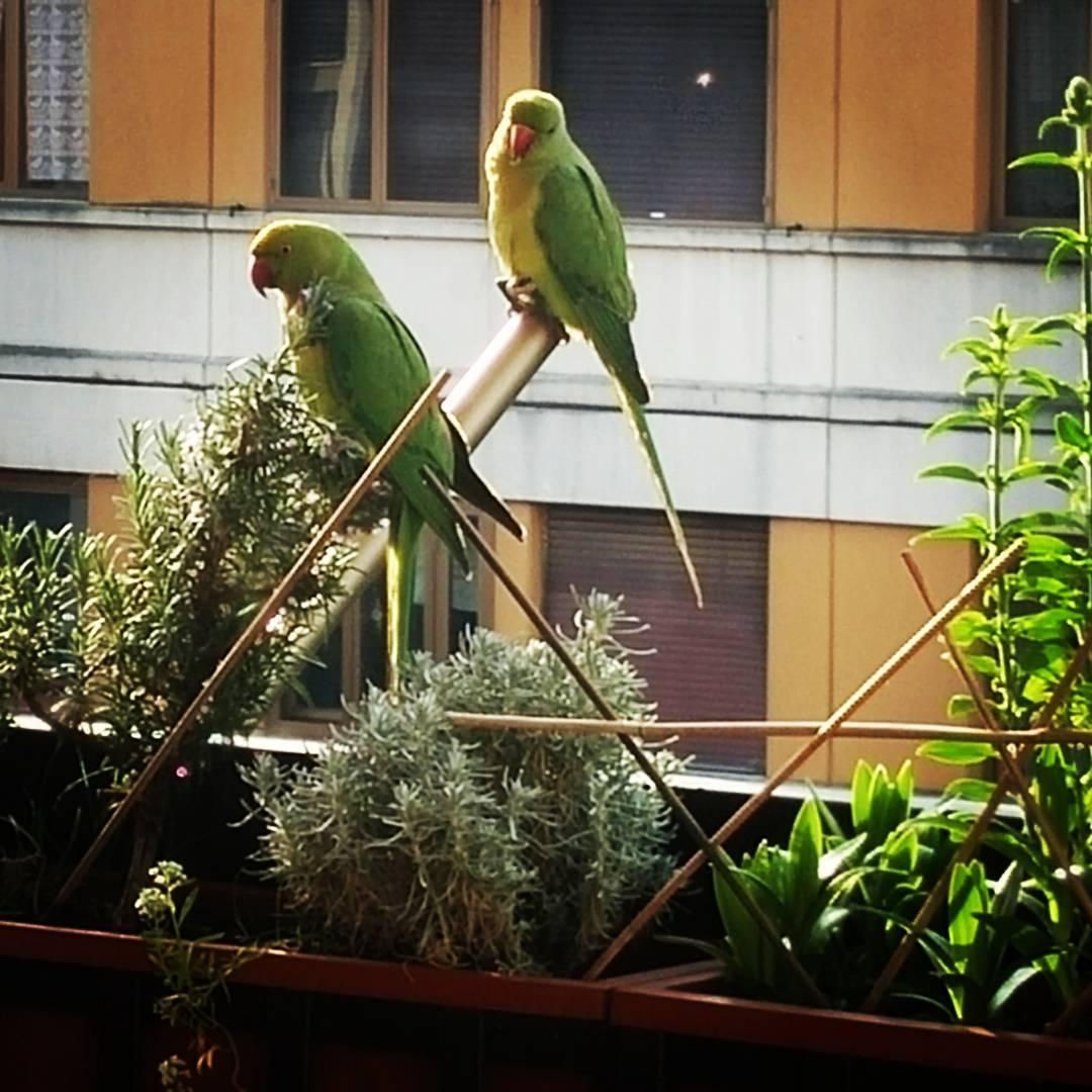 pappagalli verdi cosa fare a roma edreams blog di viaggi