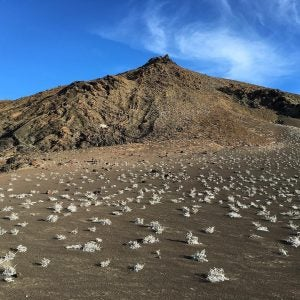 a barren hill in the galapagos islands