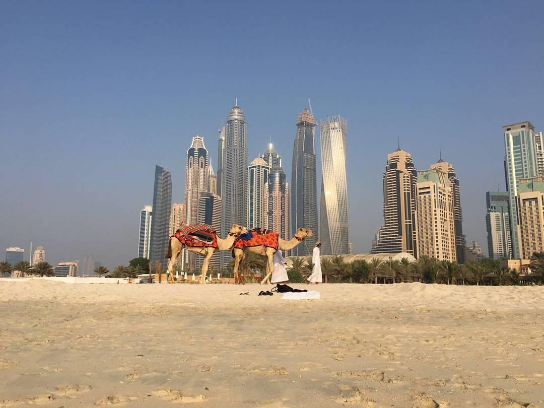 cammelli spiaggia cosa vedere dubai edreams blog di viaggi