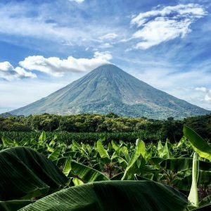 a banana plantation with mountain backdrop in nicaragua