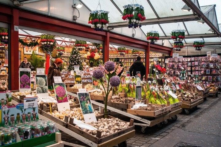 bloemenmarkt - flower market in amsterdam