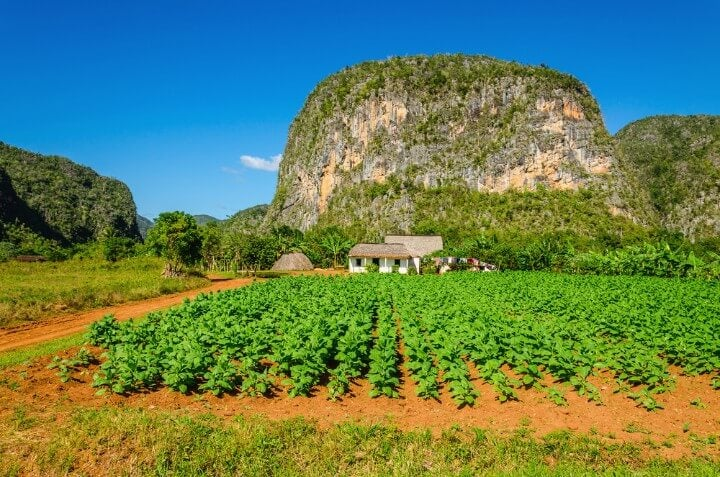 mogotes on vinales valley in cuba