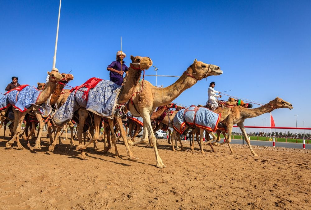 Al Marmoom Camel Race