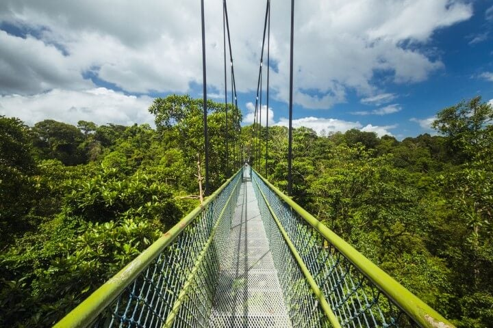 TreeTop Walk suspension bridge