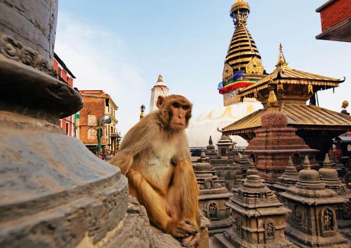 Swayambhu - the famous Monkey Temple in nepal