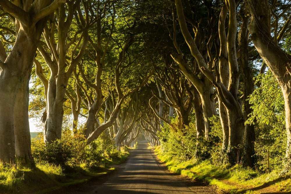 Dark Hedges - Northern Island