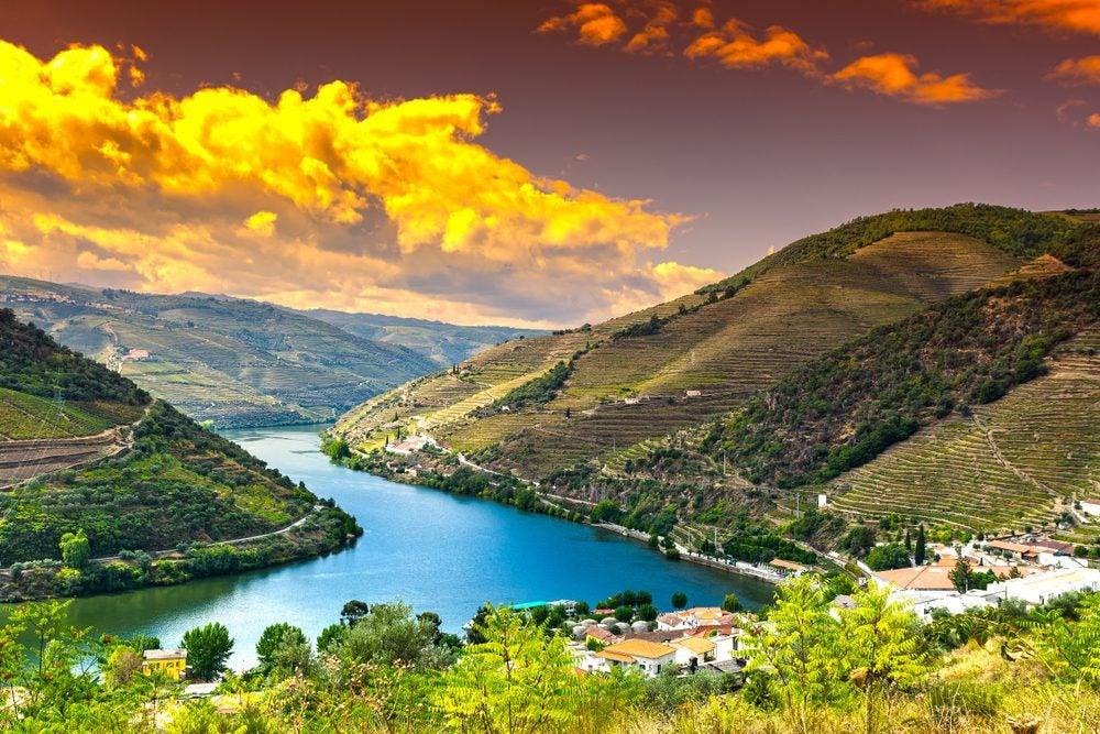 vineyard douro valley